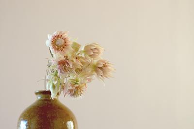 白いセルリアの花