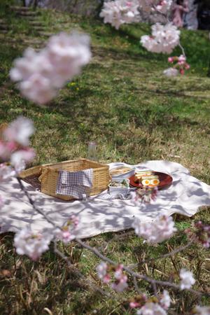 桜とサンドウィッチ